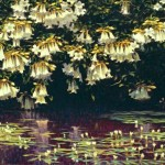 Trumpets over Lilies